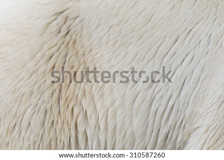 Close-up of the fur of a polarbear - stock photo