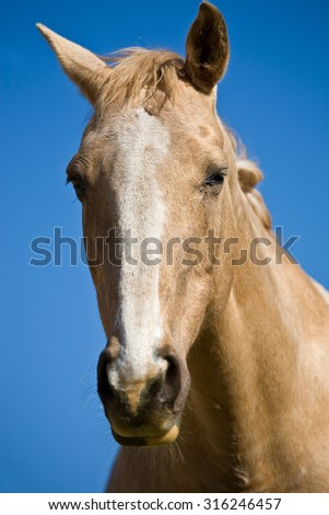 Close up of the head of a horse