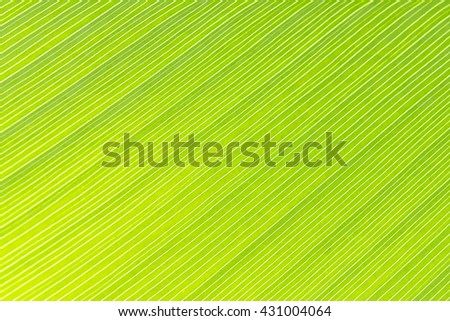close up of the leave texture,the green leave texture with the light - stock photo