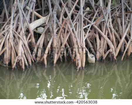close up of the magnificent mangrove forest near - stock photo