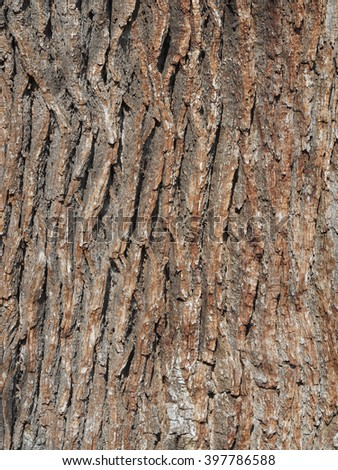Close-up of the ridges and valleys of oak tree bark.