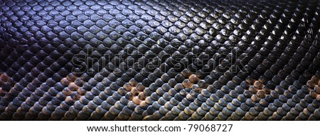 close up of the scales of a large snake on a rock - stock photo