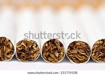 Close-up of the tobacco end of cigarettes. Focus on tobacco. - stock photo