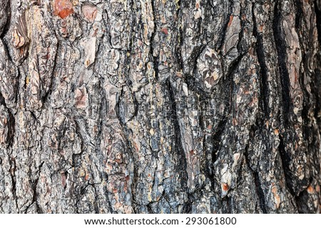 close up of the tree bark on a sunny day - stock photo