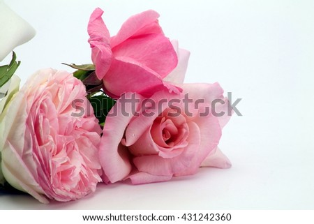 close up of three delicate roses on white - stock photo
