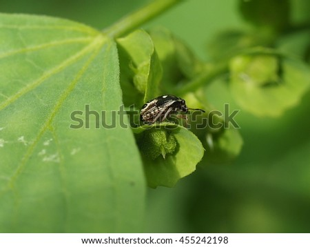 close up of tiny bug perched on  green leaf in garden - stock photo