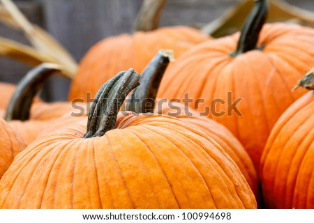 Close up of top of pumpkins. shallow focus on step of lead pumpkin - stock photo