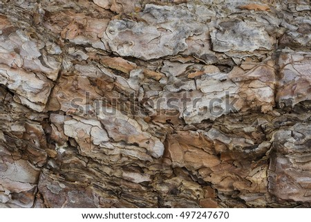 Close up of tree bark showing texture