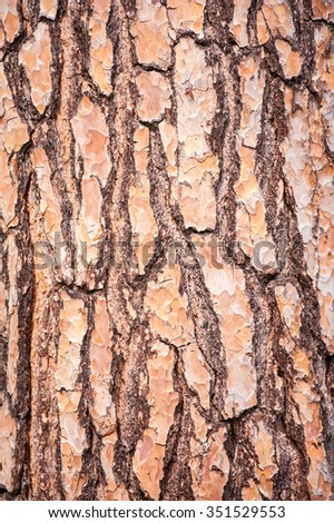 Close up of tree bark texture and grooves