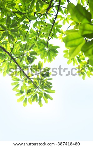 Close-up of tree leaves, backlit on blue sky background. - stock photo