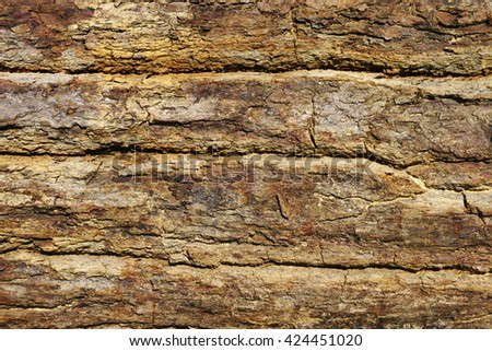 Close up of tree texture background - stock photo