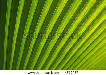 Close up of Tropical Green Leaf Texture use as a Background for Design