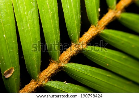 Close-up of tropical palm leaves - stock photo
