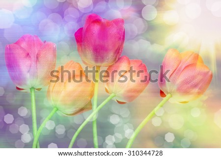Close up of tulip flowers - stock photo