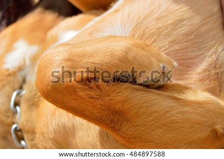 close up of two legged dog