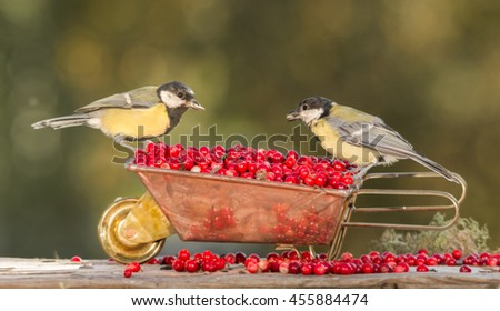 close up of two  titmouse standing on wheelbarrow with berries facing each other. - stock photo