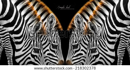 Close-up of two zebras brown mane. bend grass is so beautifully stacked neck. - stock photo