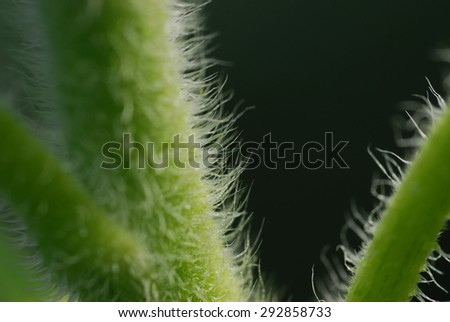 Close up of underside of yellow sunflower creates abstract background