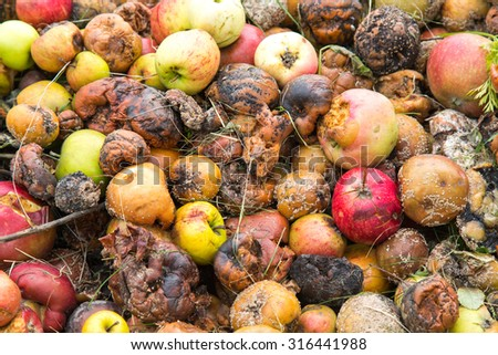 Close-up of very rotten green, yellow and red apples on a compost heap on an allotment site - stock photo