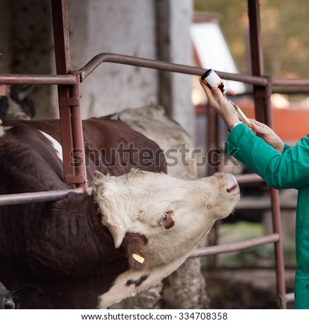 Close up of veterinarian's hand preparing vaccine for cattle on the farm - stock photo
