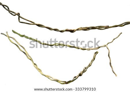 Close up of vine isolated on white background. Clipping path included.
