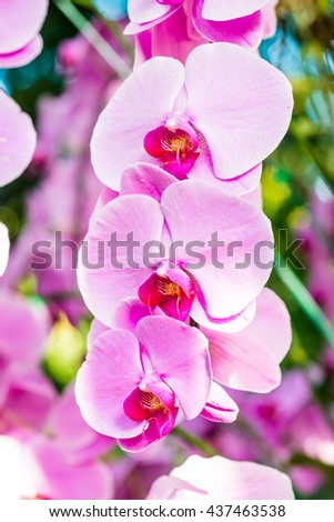 Close Up of Violet Orchid, Thailand - stock photo