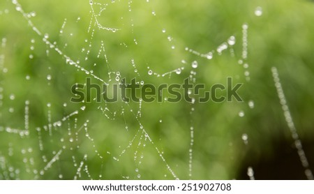 close up of water drops on spider web - stock photo