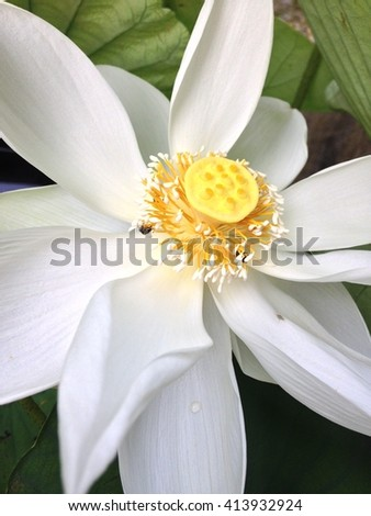 close up of water lily or lotus flower - stock photo