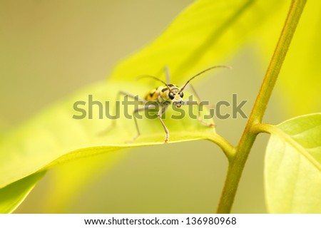 Close up of weevils on leaf - stock photo