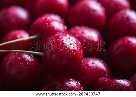 Close-up of wet cherries with water drops.