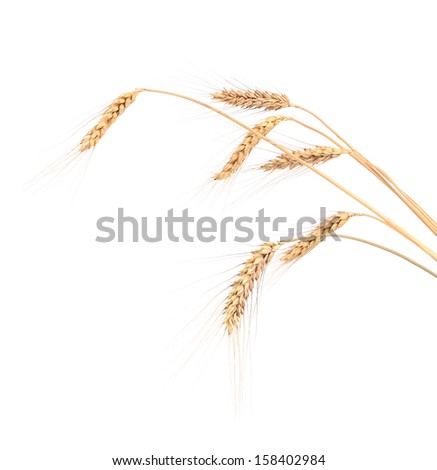 Close up of wheat ears. - stock photo