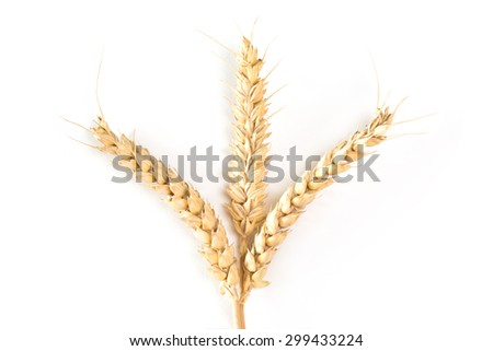 Close up of wheat ears over white background - stock photo