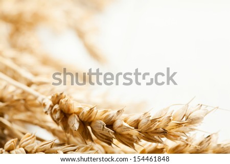 Close-up of wheat ears. Selective focus - stock photo
