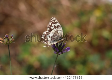 Close-up of white and brown butterfly pollinating violet wildflowers