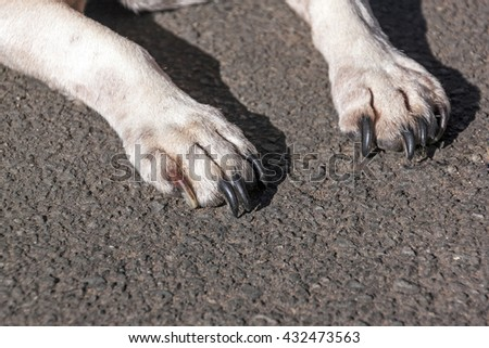 Close up of white dog paws resting on Asphalt road surface
