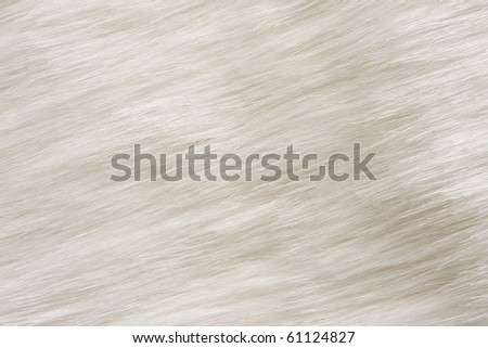 Close up of white fur for background. - stock photo