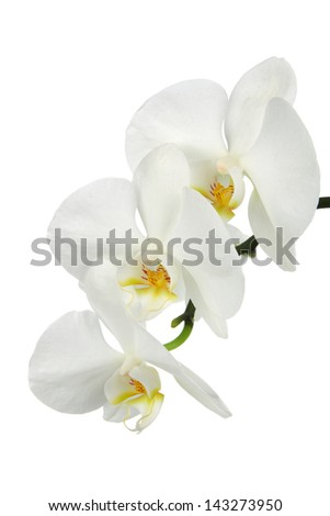 Close-up of white orchids flowers on white background - stock photo
