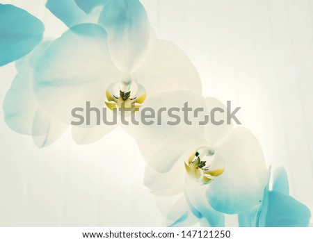 Close-up of white orchids on light background. - stock photo