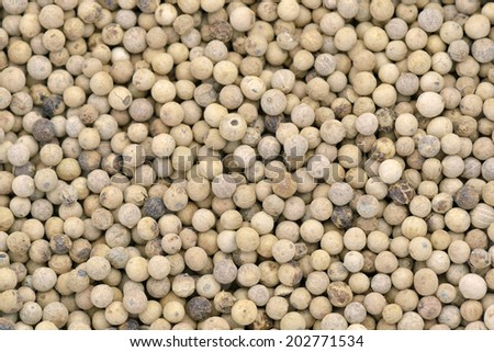 Close-up of white pepper to use as background - stock photo