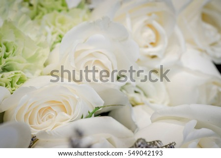 Close up of white rose flower.