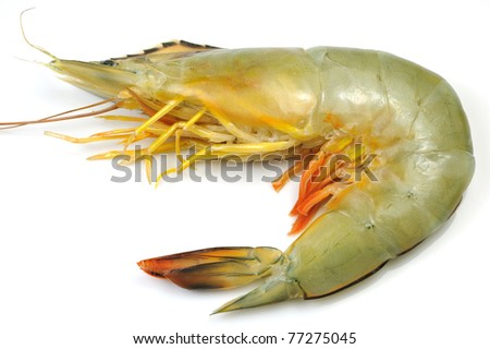 Close-up of White Shrimp isolated on white.