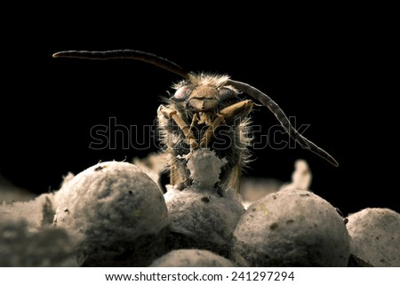close up of wild bee - stock photo