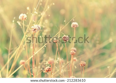 Close up of wildflowers and plants in sunny field - stock photo