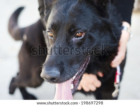 Close-up of woman holding and stroking her dog - stock photo