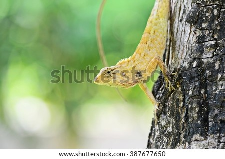 close up of yellow iguana, tree lizard, chameleon, colorful reptile - stock photo