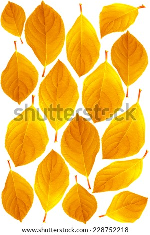 Close-up of yellow leaves, isolated on white background. - stock photo