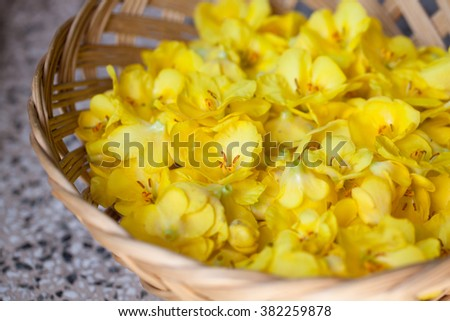 Close-up of yellow mullein flowers in a basket