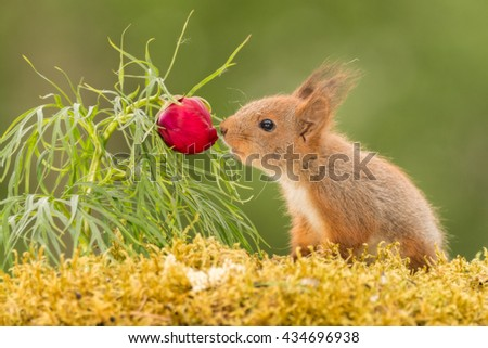 close up of young red smelling a flower bud