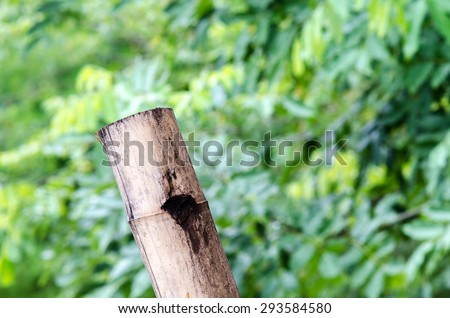 close up old bamboo with forest background