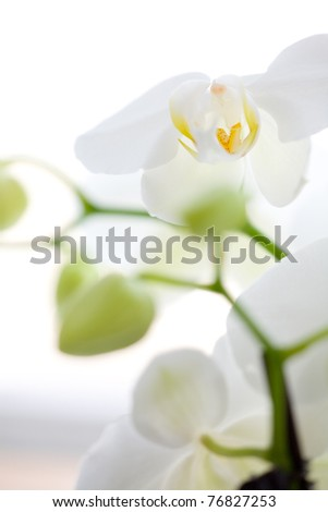 Close up on a aphordite orchidee - stock photo